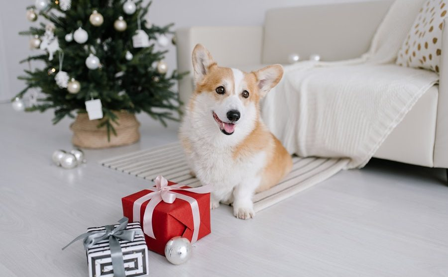 9 Christmas gifts for dog lovers